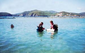 Practicando en aguas no profundas en Playa Las Gatas